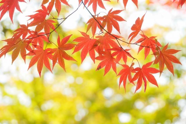 香嵐渓周辺の紅葉の穴場 岩屋堂公園 ライトアップと駐車場情報